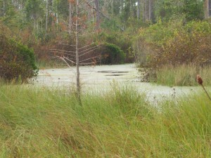 Close up of suspected pond.